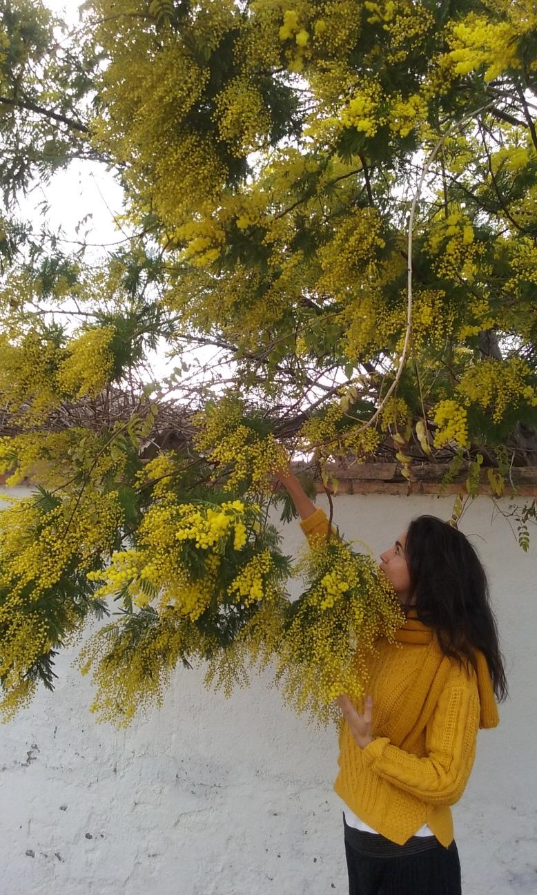 amarillo 2